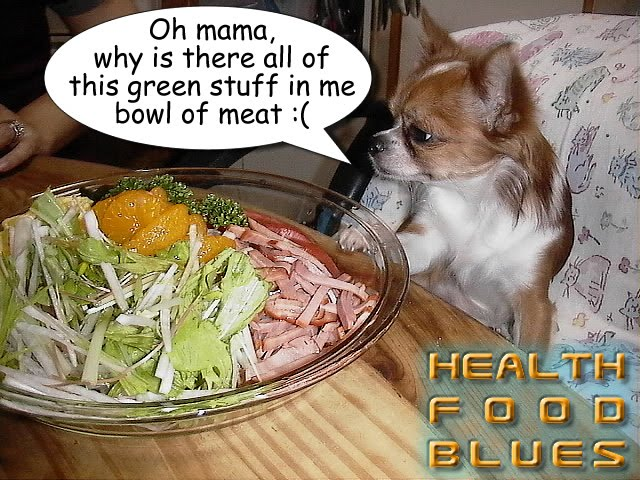 From TigerSan's PhotoBlog: Health Food Blues: Oh mama, why is there all of this green stuff in me bowl of meat :(