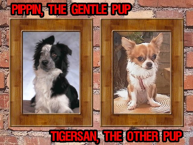 From TigerSan's PhotoBlog: Pippin, the Gentle Dog.