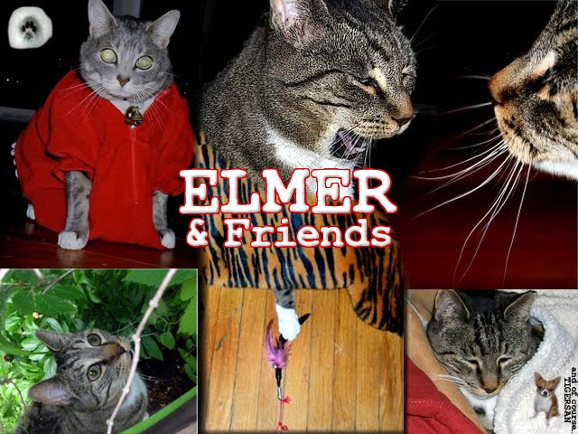 From TigerSan's PhotoBlog: Elmer and Friends... and of course, Tigersan