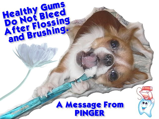 From TigerSan's PhotoBlog: Healthy Gums do not bleed after flossing and brushing: A message from Pinger