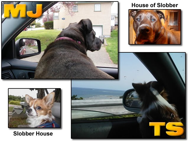 From TigerSan's PhotoBlog:  MJ's House of Slobber, TS: Slobber House