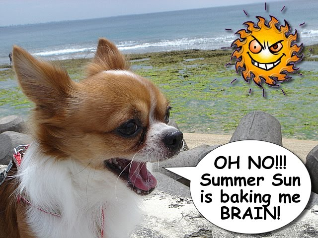 From TigerSan's PhotoBlog: OH NO!!! Summer Sun is baking me BRAIN!