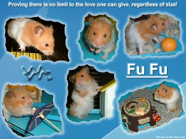 From TigerSan's PhotoBlog: Fu Fu the Hamster: Proving there is no limit to the love one can give, regardless of size!