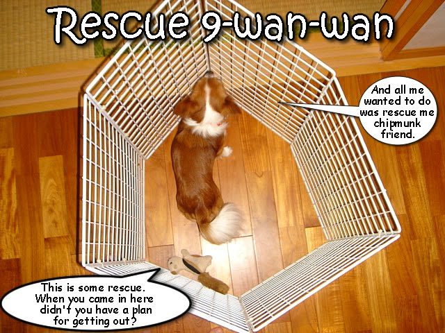 From TigerSan's PhotoBlog: Rescue 9-wan-wan: And all me wanted to do was rescue me chipmunk friend. This is some rescue. When you came in here didn't you have a plan for getting out?