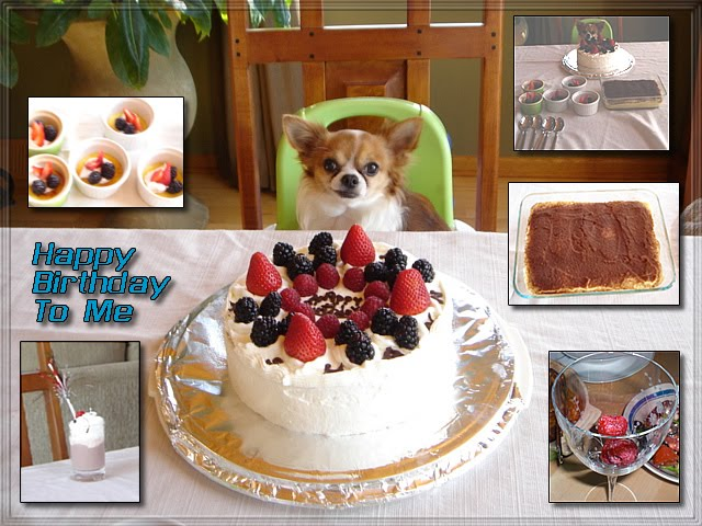 From TigerSan's PhotoBlog: Happy Birthday Chihuahua.