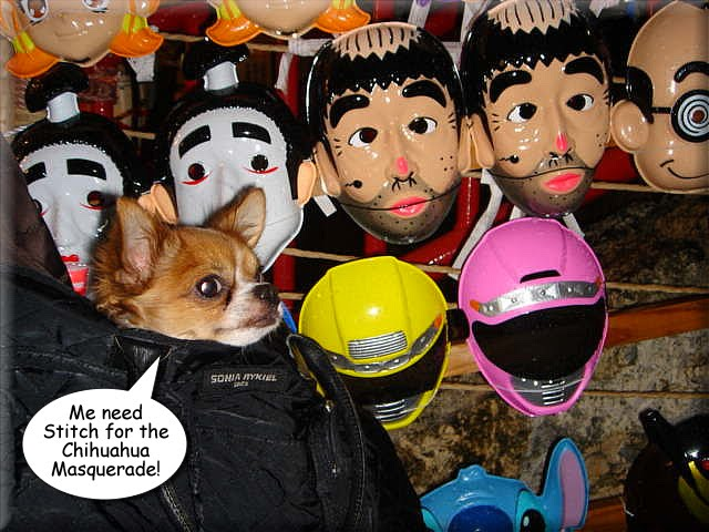 From TigerSan's PhotoBlog: Me need Stitch for the Chihuahua Masquerade!