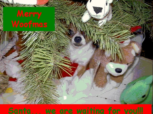 From TigerSan's PhotoBlog: Merry Woofmas... Santa... we are waiting for you.