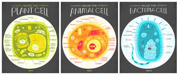 Structure and functions of living organisms cells tigers cells are the basic unit of structure in plants and animals you are even made of millions and millions of tiny cells there are many different types of ccuart Gallery