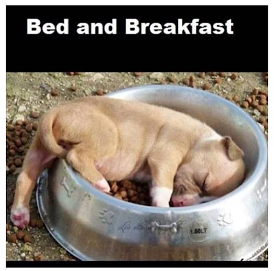 [Image: Bed%20and%20Breakfast%20dog.png?height=3...;width=400]