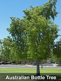 Willow Acacia Carob Mimosa Australian Bottle Tree Oak Eucalyptus Mulberry Saguaro Cactuore Find Your And Give Us A Call Today