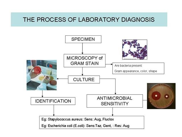 MICROBIOLOGY OVERVIEW - DISTRICT LAB MICROBIOLOGY