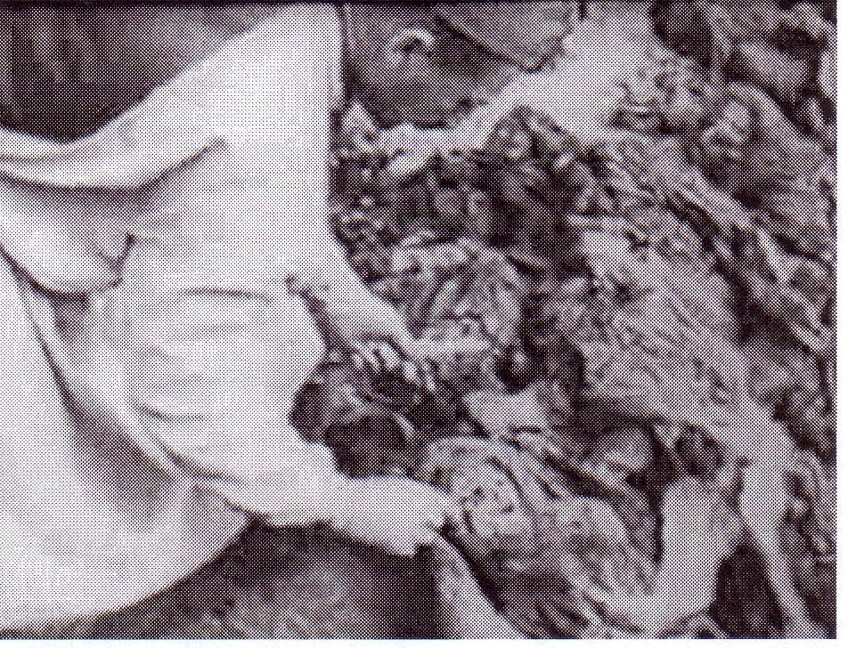 филипп гуревич
