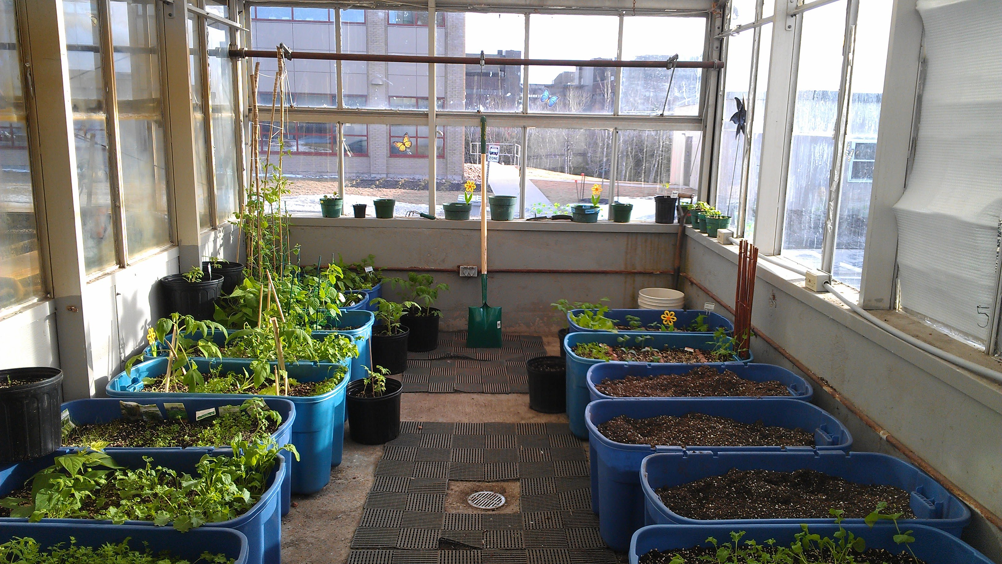 winter container garden unb green society