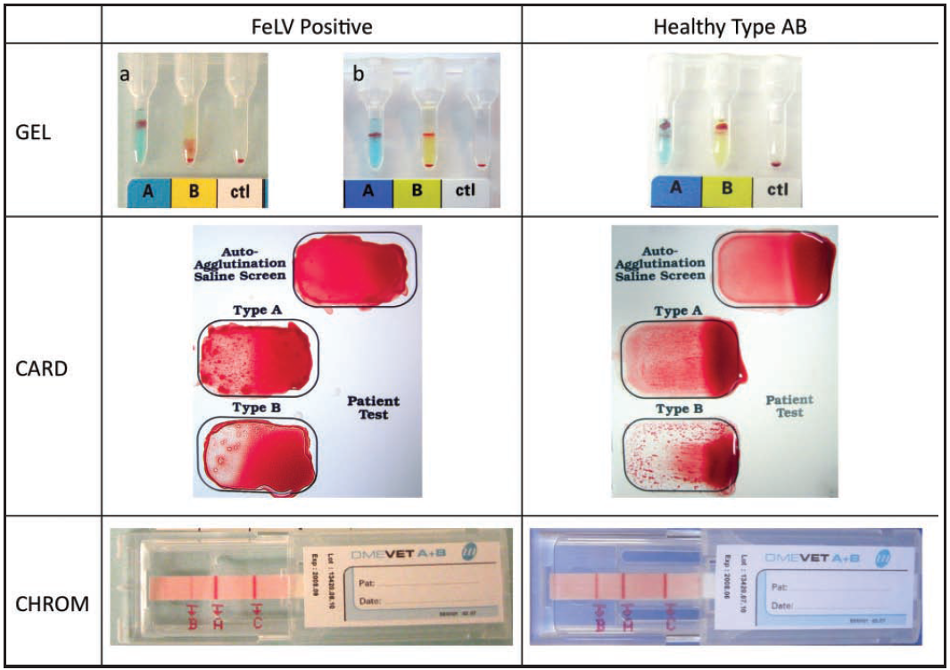 Blood typing and which test should i use vaaccs here is a visual picture comparing the results in in type ab with and with out felv pooptronica