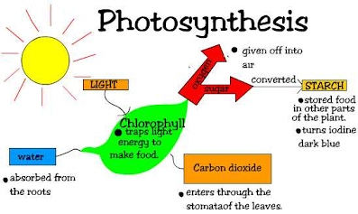 photosynthesis diagram   vdgscience  be specific about what happens to each part  where does the energy come from  what does the plant actually use the energy for  what happens to each of the