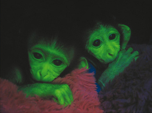 https://sites.google.com/site/vervemonkeyproject/Home/images/web-images/glowing_monkeys.png