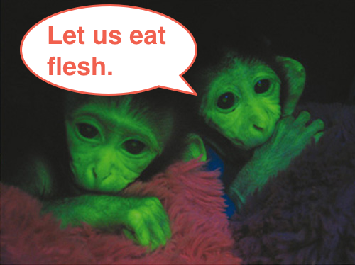 https://sites.google.com/site/vervemonkeyproject/Home/images/web-images/glowing_monkeys_flesh.png