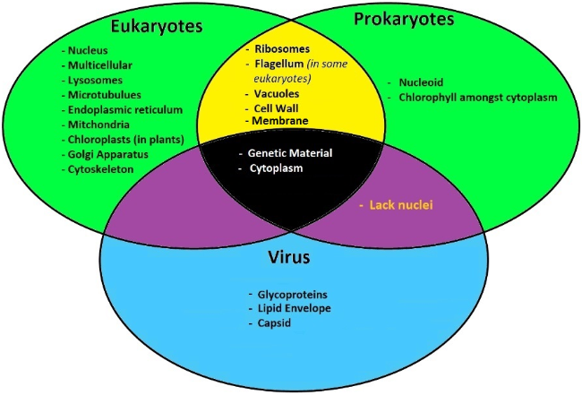 Pro vs virus mini2g image result for bacteria v virus venn diagram ccuart Choice Image