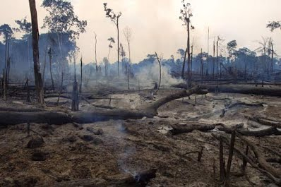 the devestating effect of deforestation and the alternatives for helping our planet Sample records for facing water resources  deforestation,  water resources in all regions of the united states will be the most severe effect of global.