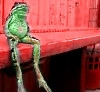 frog sitting on the dock of the bay