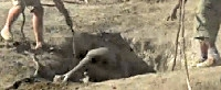 Tear jerker rescue of baby elephant stuck in hole video