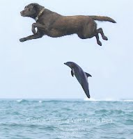 Dolphin Jumping With Flying Dog (Volatility Research)