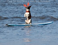 Dog On Surf Board Imitating Reindeer (Volatility Research) 1000w
