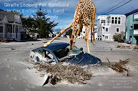 Giraffe Looking For Survivors In Car Embedded In Sand By Hurricane Sandy (Volatility Research) 1000w