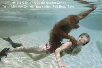 Hillary Clinton Caught Scuba Diving With Monkey On Her Back After Full Body Tuck (Volatility research) 1000w