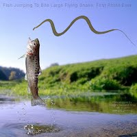 Fish Jumping To Bite Large Flying Snake First Photo Ever (Volatility Research) 1000w