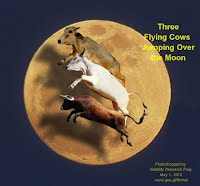 Three Flying Cows Jumping Over the Moon Racing (Volatility Research) 1000w