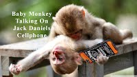Baby Monkey Talking On Jack Daniels Cellphone (Volatility Research) 100h3