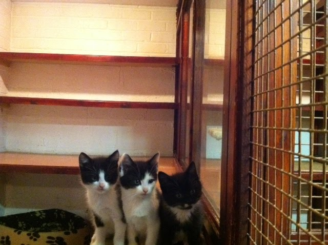 Warren house farm cattery pictures