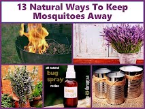 Get Rid Of Mosquitoes In Yard Naturally