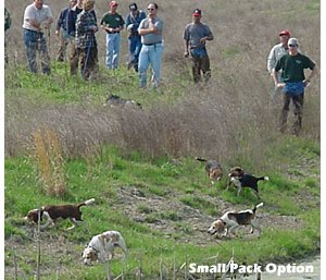 Beagling Terminology - Ohmer's Westside Beagles
