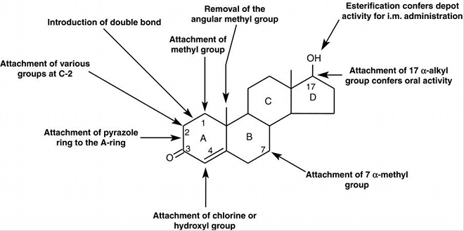 Structure Of Steroids What Makes Anabolic Steroids Bad