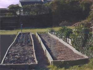 http://windintheroses.googlepages.com/raisedbeds.jpg