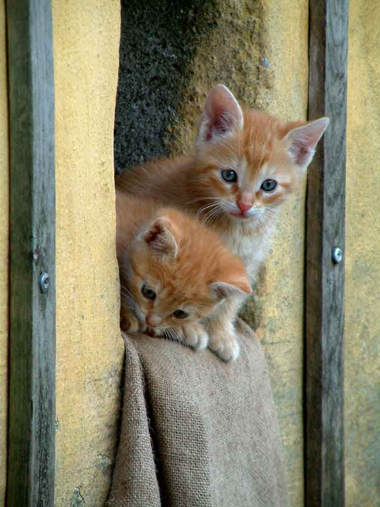 how to get rid of worms in kittens