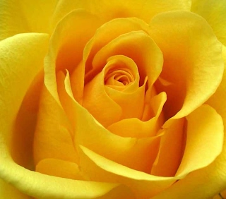 The Zonta Rose, commissioned by Zonta International, is a symbol of excellence and friendship.